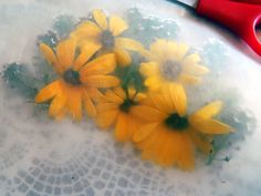 How To Press Flowers With Wax Paper