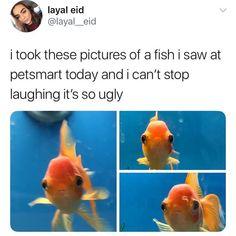 Good thing goldfish have short memories