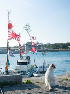 写真家 黒岩 正和 | Photographer Kuroiwa Masakazu » photography Discovery, Cool Photos, Fair Grounds, Japan, Photography, Travel, Photograph, Viajes, Fotografie