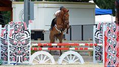 #horseshow #hunterjumpers #jumpers #equestrian