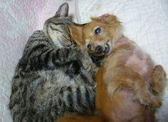 おばあちゃん猫 VS おばあちゃん犬 - http://iyaiyahajimeru.jp/cat/archives/55101