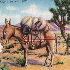 Humorous desert postcard from 1934.