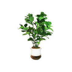 """54"""" Fiddle-Leaf Tree in Planter - Faux Trees ($399) via Polyvore featuring home, home decor, floral decor, decorative accessories, artificial silk trees, white trees, white artificial tree and silk trees"""