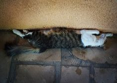 Угадайте кому на Кипре жить хорошо?  #Cyprus #Cyprus2019 #cyprusisland #CyprusButterfly #cypruscat Cyprus News, Cats, Animals, Gatos, Animales, Animaux, Animal, Cat, Animais