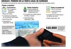 Largas filas de personas en farmarcias en busca MarihuanaCannabis luego de estar legalizada en Uruguay URUGUAY.-Las cuatro farmacias registradas ante el Instituto de Regulación y Control de Cannabis (Ircca) para vender marihuana de uso personal en la capital uruguaya agotaron sus existencias