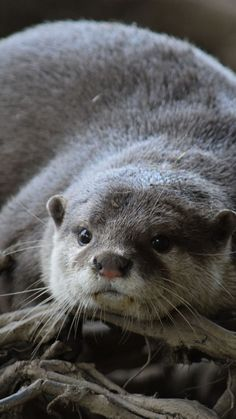 720x1280 wallpaper Cute, otter, aquatic animal, rodent