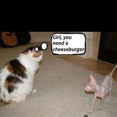Girl, you need a cheeseburger!  LOL!!
