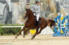 AREZZO - Spettacolo all'Equestrian Centre con la Winter Cup - http://www.toscananews.net/home/arezzo-spettacolo-e-applausi-allequestrian-centre-con-la-winter-cup/