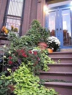 brooklyn stoop