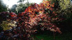 #Autumn in Lancaster