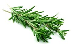 Rosemary is a widely used plant most commonly included in recipes in the kitchen. While this plant has been used throughout history as an herbal healer, it has been proven to possess anti-inflammatory and pain inhibiting properties[11]. Rosemary also positively affects the brain—boosting mood and providing cognitive benefits—and has a significant effect on alertness and memory enhancement.