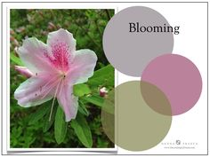 When it comes to Holistic Hues- they have a really important role in the home. Here I have a graphic that displays a soft green next to pink. Did you know that green is the color of the Heart Chak...