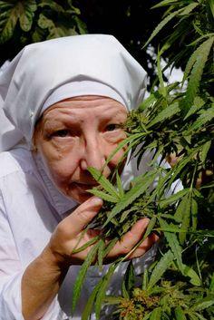 DSCF3058 2 683x1024 Conheça as Freiras da Califórnia que plantam e fumam maconha para fins medicinais
