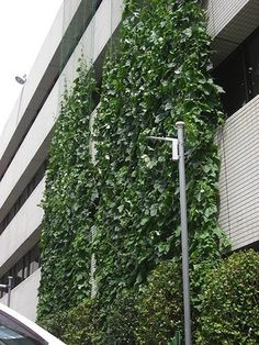 a cooling green garden curtain