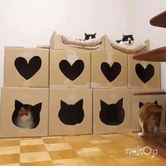 Porta-gatos!  This is an inexpensive creative idea although it will not stay looking so cute for long with cats that love to chew on cardboard.