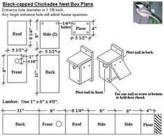 American Robin Nest Box Plans Those Guys Have Got To