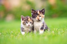 c348106cd5b3c Gatos Bonitos, Gatinhos Adoráveis, Gatos Bonitos, Eu Amo Gatos, Animais  Bebês,