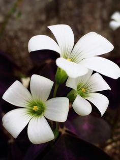 White ☆☆.。.:*