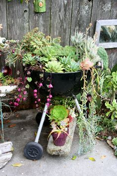 bbq grill and succulents | kelly kilpatrick | Flickr
