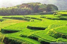 Hapcheon Daraknon rice fields
