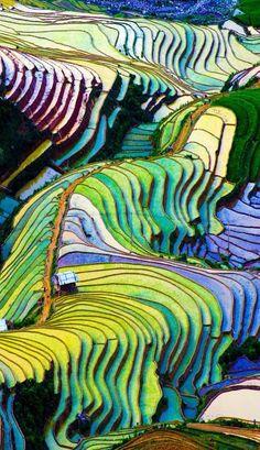 Beautiful Terraced rice field in Vietnam