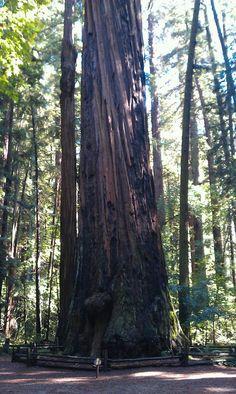 Santa Cruz, CA ...Redwoods