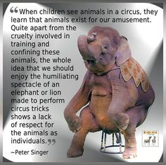 My mum never took me to a circus. Now I know why, and am greatful. Please don't support brutal animal cruelty! Vegan Quotes, Stop Animal Cruelty, Animal Welfare, Animal Rights, Going Vegan, Animals And Pets, Save Animals, Wild Animals, Animal Rescue