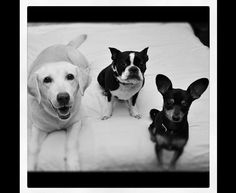 Oh MY menagerie! How I love them...            Paisley, Sophie & Tilly