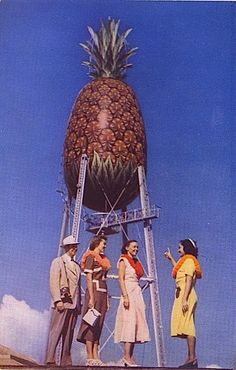 """""""Our hula tells the story of how Hawaii stole The Big Pineapple from that other island""""."""