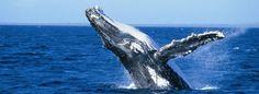 Punta Cana Whale Watching | Samana Whale Watching Trip