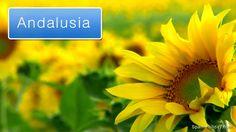 Mojacar, Almeria province, southern Spain – tourist information, map Andalusia Travel, Andalusia Spain, Spain Holidays, Tourist Information, Cadiz, Seville, Malaga, Holiday Travel, Granada