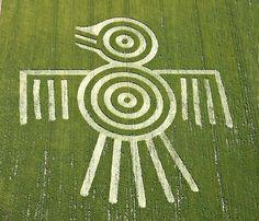 Aztec Spirit Bird Thunder Bird Crop Circle England Wiltshire