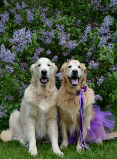 Sending a bouquet of lilacs from Brie and Bentley