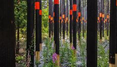 Afterburn by Civilian Projects   International Garden Festival at the Jardins de Métis, Grand Métis, Quebec. Nicko Elliott and Ksenia Kagner created this abstraction of a Boreal forest fire's aftermath using charred posts interspersed with evergreen saplings and pioneer species – the first plants to repopulate an area following a blaze. Sited in a forest clearing, the installation recalls plants' regenerative powers to remind us that fires are part of a forest's natural cycles.