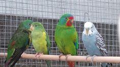 A variety of pretty birds