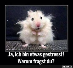 Plus, ein Habitat Book Cover Freebie - Witzig - Lustig Funny Animal Jokes, Cute Funny Animals, Funny Animal Pictures, Animal Memes, Animal Humor, Funny Animal Sayings, Animal Captions, Funny Photos, Haha Funny