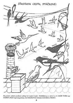 Special Needs, Vintage World Maps, Birds, Education, Kindergarten, Bird, Onderwijs, Learning