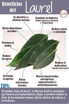 Healing Herbs, Medicinal Plants, Natural Healing, Natural Medicine, Herbal Medicine, Healthy Drinks, Healthy Tips, Health And Nutrition, Health And Wellness
