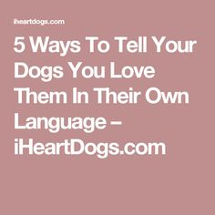 5 Ways To Tell Your Dogs You Love Them In Their Own Language – iHeartDogs.com