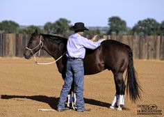 Groundwork Exercise #4: Slap & Tap  Goal: To be able to slap and tap all over the horse's body with your hands while he stands still and relaxes.  More about the exercise: https://www.downunderhorsemanship.com/Store/Product/MEDIA/D/253/