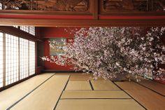naoki-sasaki / ikebana