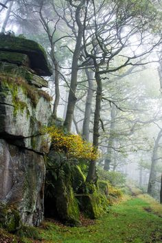 wanderthewood:  Padley Gorge Peak District England by BazGimage