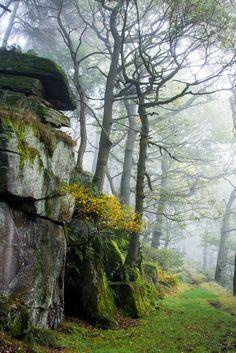 Padley Gorge, Peak District, England by BazGimage