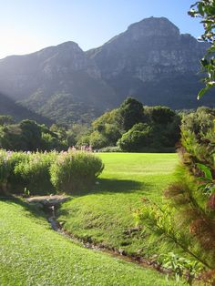 Kirstenbosch National Botanical Garden, Cape Town, South Africa i wanna see Most Beautiful Cities, Beautiful Places To Visit, Places To See, National Botanical Gardens, Cape Town South Africa, Out Of Africa, Beautiful Gardens, Natural, Scenery
