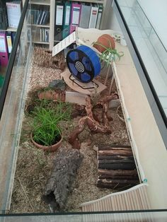 [Terrarium] cm - Sir Humphreys Residenz - Gehegevorstellung - www. Dwarf Hamster Cages, Hamster Bin Cage, Gerbil Cages, Hamster Tank, Hamster Live, Russian Tortoise Care, Terrarium, Chinchilla Pet, Hamster Habitat