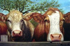 A Pair Of Dairy Cows