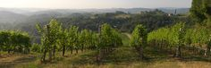 """Die Einzellage """"Hochsulz"""" des Weinguts SKOFF ORIGINAL Vineyard, The Originals, Nature, Travel, Outdoor, Wine, Outdoors, Naturaleza, Viajes"""