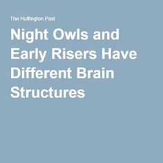 Night Owls and Early Risers Have Different Brain Structures  | Updated Jan 31…