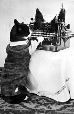 Cat with Typewriter by State Historical Society of North Dakota on Flickr. Photograph by Nancy Hendrickson.