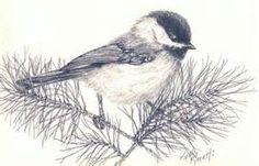 chickadee sketch